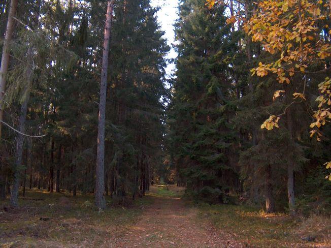 Las wyhodowany z sadzonek ze szkółki Piasutno