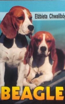 Beagle /5323/