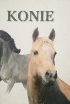 Konie /32031/