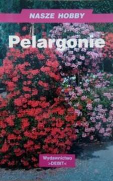 Pelargonie /3006/