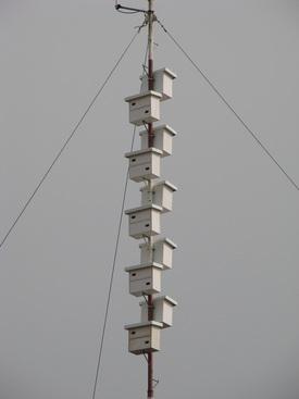 wieża dla jerzyków wykonanie Ussuri i apus