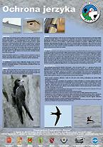 Plakat o ochronie jerzyka