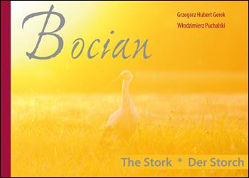 BOCIAN – The Stork – Der Storch