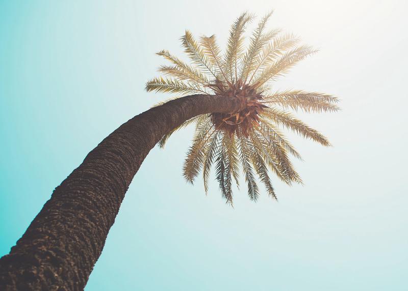 PLAY ma bardzo wysoką stację imitującą wysokie drzewo