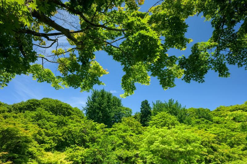 EKO GB w Orange Flex - przekazuj, kiedy chcesz i posadź z nami las!
