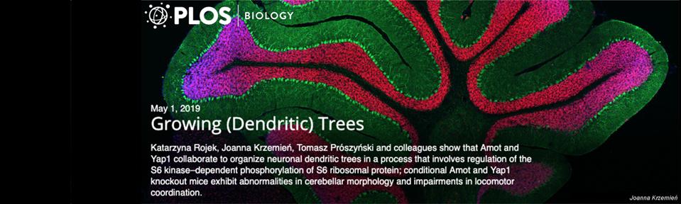 """""""Neurony, drzewa i równowaga…"""""""