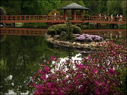 Ogród Japoński we Wrocławiu/ Japanese Garden in Wrocław