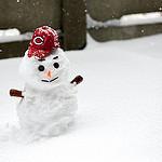 Zimowe karpie