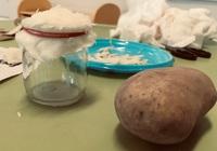 """Zabawa badawcza - ,,Co kryje w sobie ziemniak?"""""""
