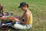 Obrączkowanie piskląt błotniaka łąkowego. Fot. M. Rzępała
