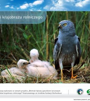 Ptaki krajobrazu rolniczego