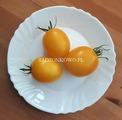 De Barao Yellow (De Barao Zolotoy)