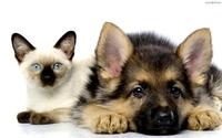 Oferta produktów dla Psów i Kotów