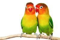 Oferta produktów dla Ptaków