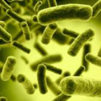 Why should you take probiotic ?