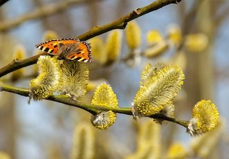 Overcoming Spring Allergies Naturally