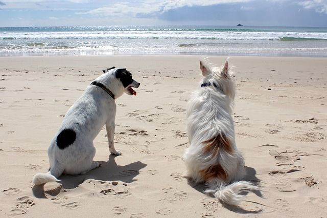 You love your pet's - help them live Healthy!