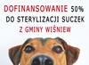 """Zdjęcie pieska z napisem """"Dofinansowanie 50% do strylizacji suczek z gminy Wiśniew""""."""